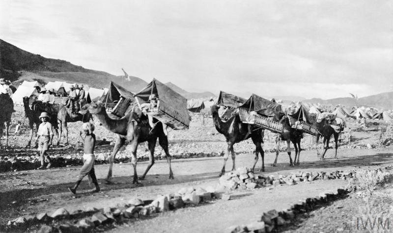 Dromedary camels carry wounded men to safety on the North West Frontier of India. © IWM (Q 54973)