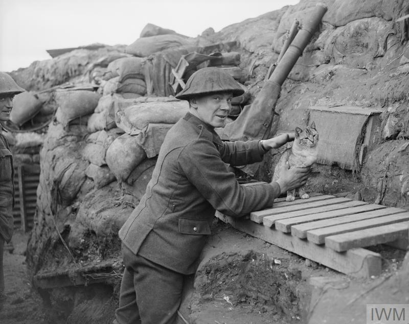 A Lewis gunner with the Regiment's cat mascot, in a trench near Cambrin, 6 February 1918. © IWM (Q 8463)