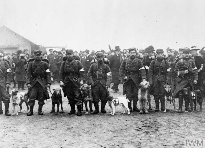 French Red Cross dogs. 1914. © IWM (Q 53509)